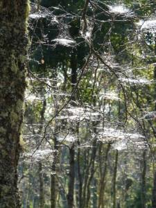 Spider webs in autumn morning sun