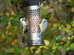Coal and blue tit on Dinnet feeder