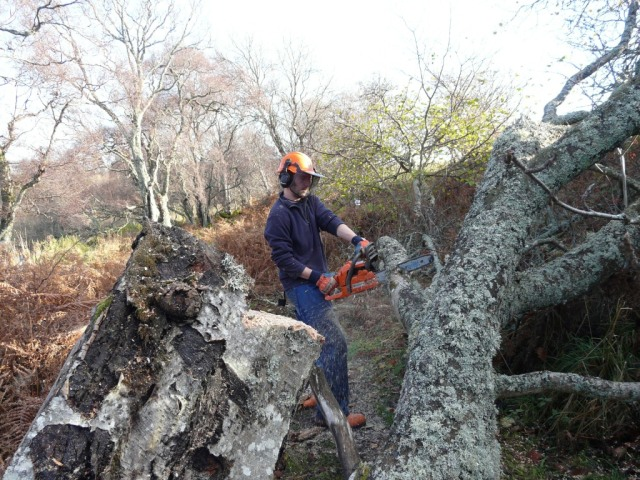 Clearing a tree off the Kinord path
