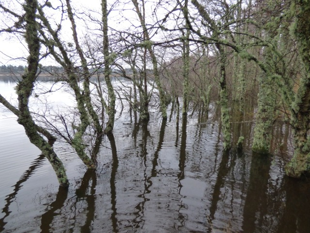 Flooded Loch edge, Loch Davan