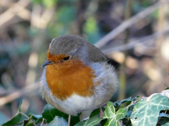 """Robin """"listening"""""""