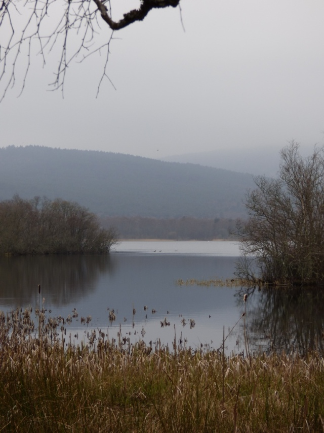 Loch Kinord looking west