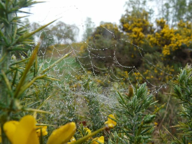 All the cobwebs are grey with dew
