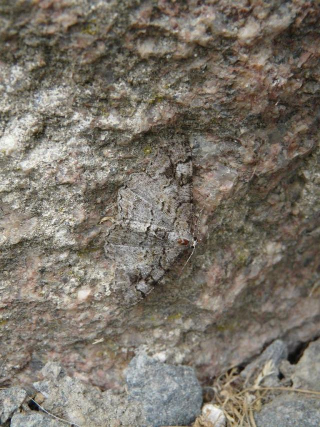 Spot the moth? A mottled beauty on the visitor centre.