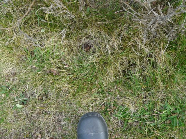 Hard to spot! baby adder curled up about a foot in front of my toes!