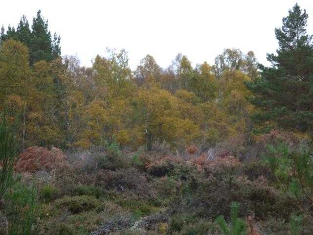 Autumn colours - in the rain!