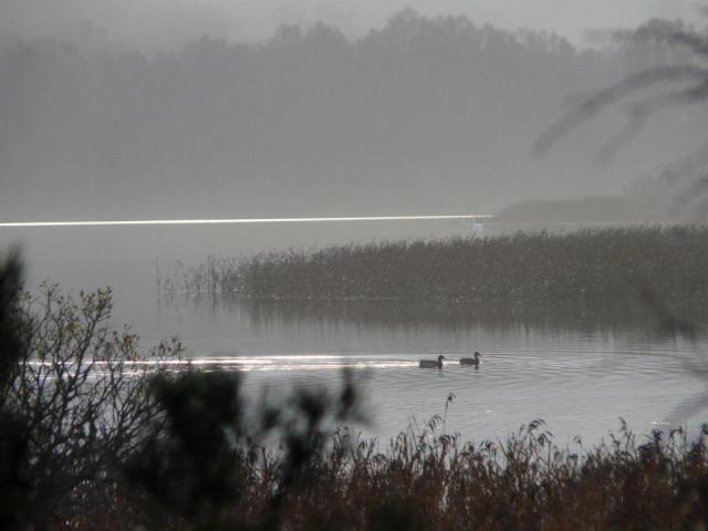 A misty mornign on Loch Davan