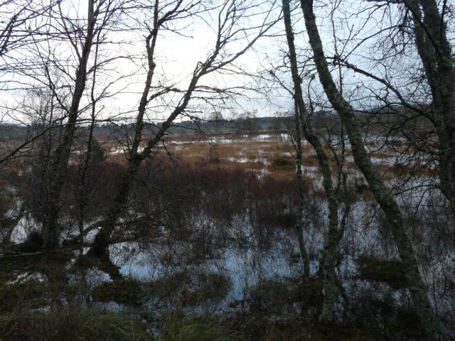 Flooded edges of Loch Davan