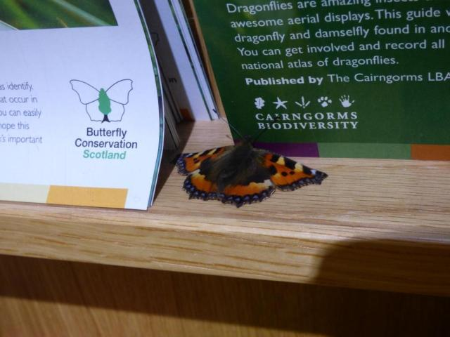 Product placement? Small Tortoiseshell advertising Butterfly Conservation and Cairngorms Biodiversity