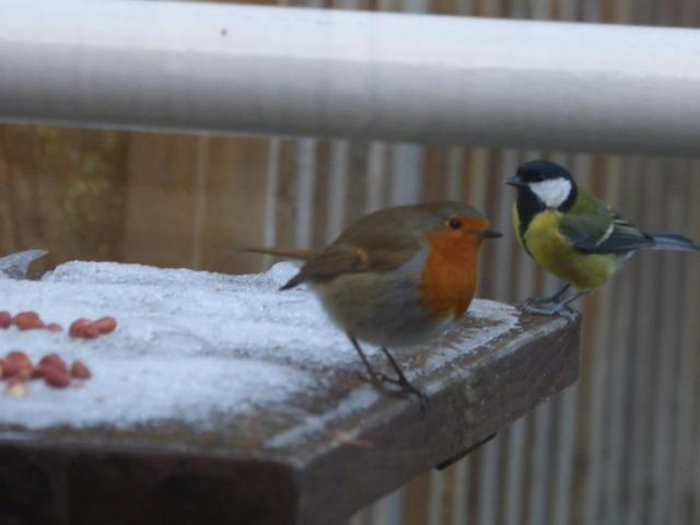 ....and it didn't take the other birds long to get in on the action too!
