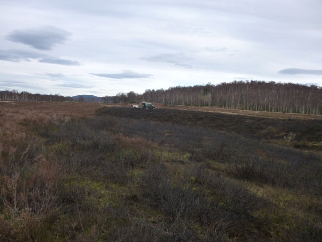 Around 1/2 hectare of burnt heather