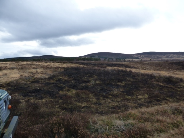 Patches of burnt heather