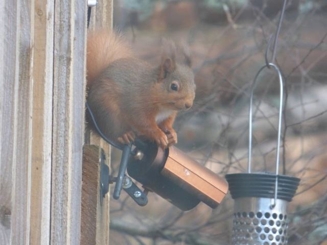 Now, Mister Squirrel, exactly how do you think the aerial on our camera got broken....?????