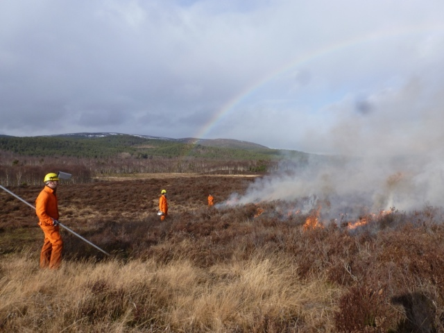 Somewhere under the rainbow...heather burning and cursing the weather...