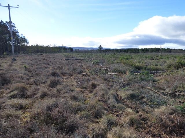 Black Moss tree felling