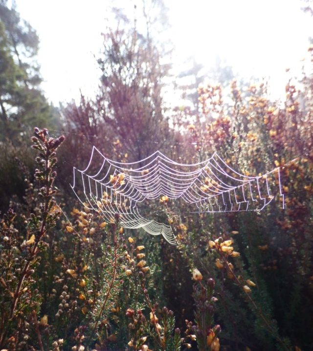 Spiders web in the morning sun