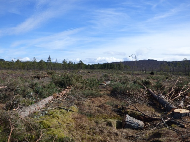 Felled trees at Black Moss