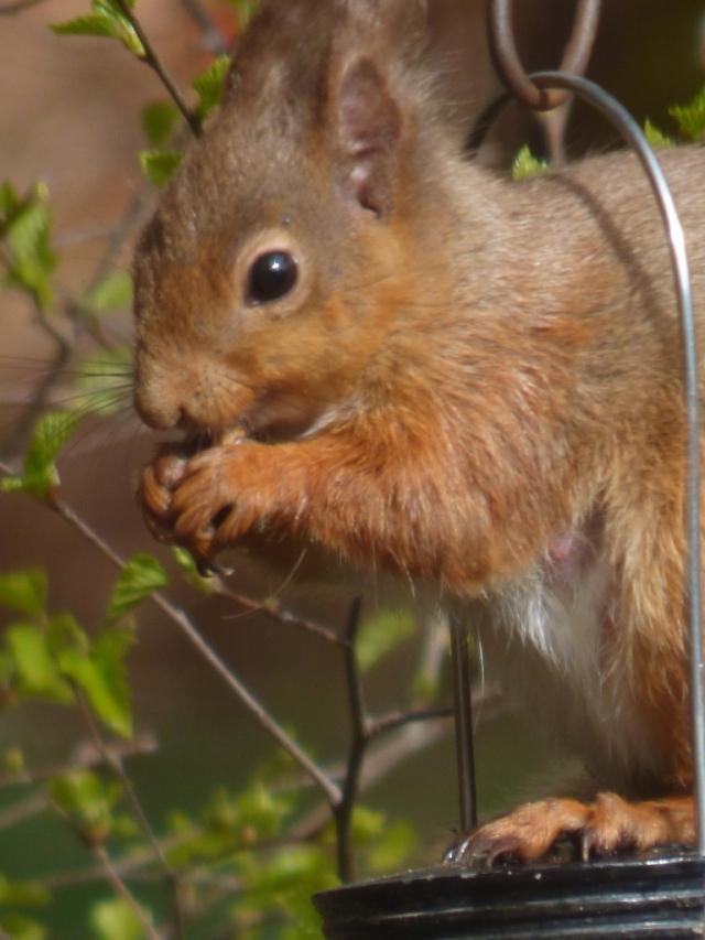 Peanut thief!