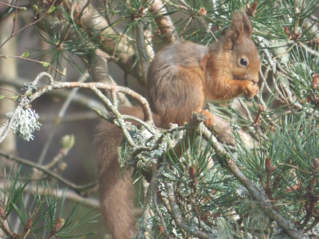 A different squirrel- smaller and greyer o the back