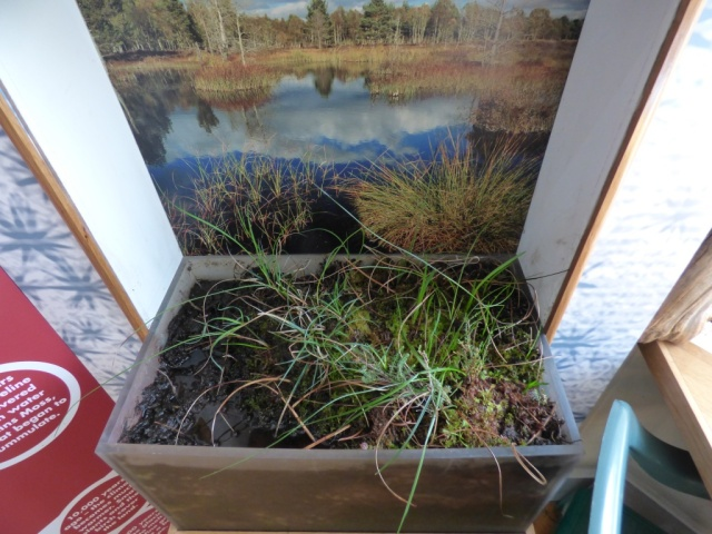 The live bog in the centre is looking well
