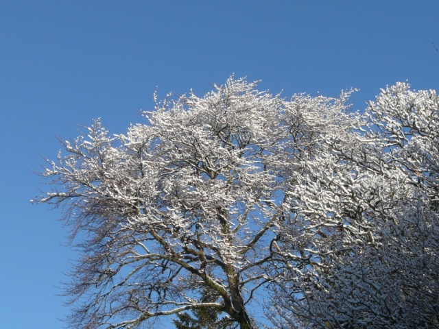 The overnight snow has clung to all the branches