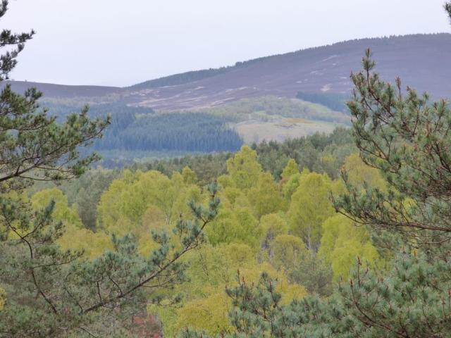 The birches seem to glow green even on a dull day