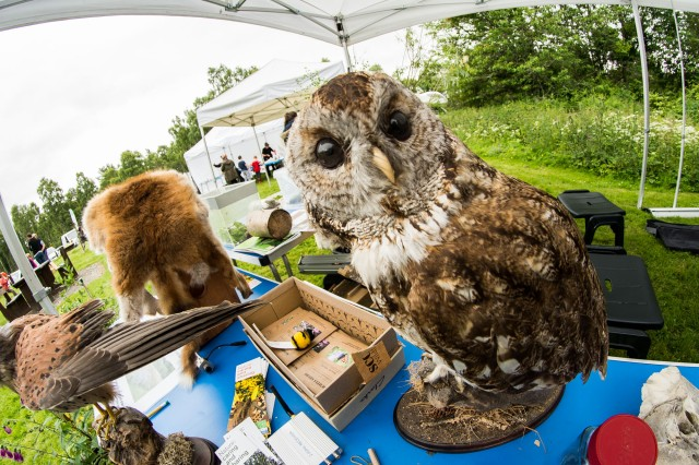 Hands-on specimens at the fun day (not a live owl!)