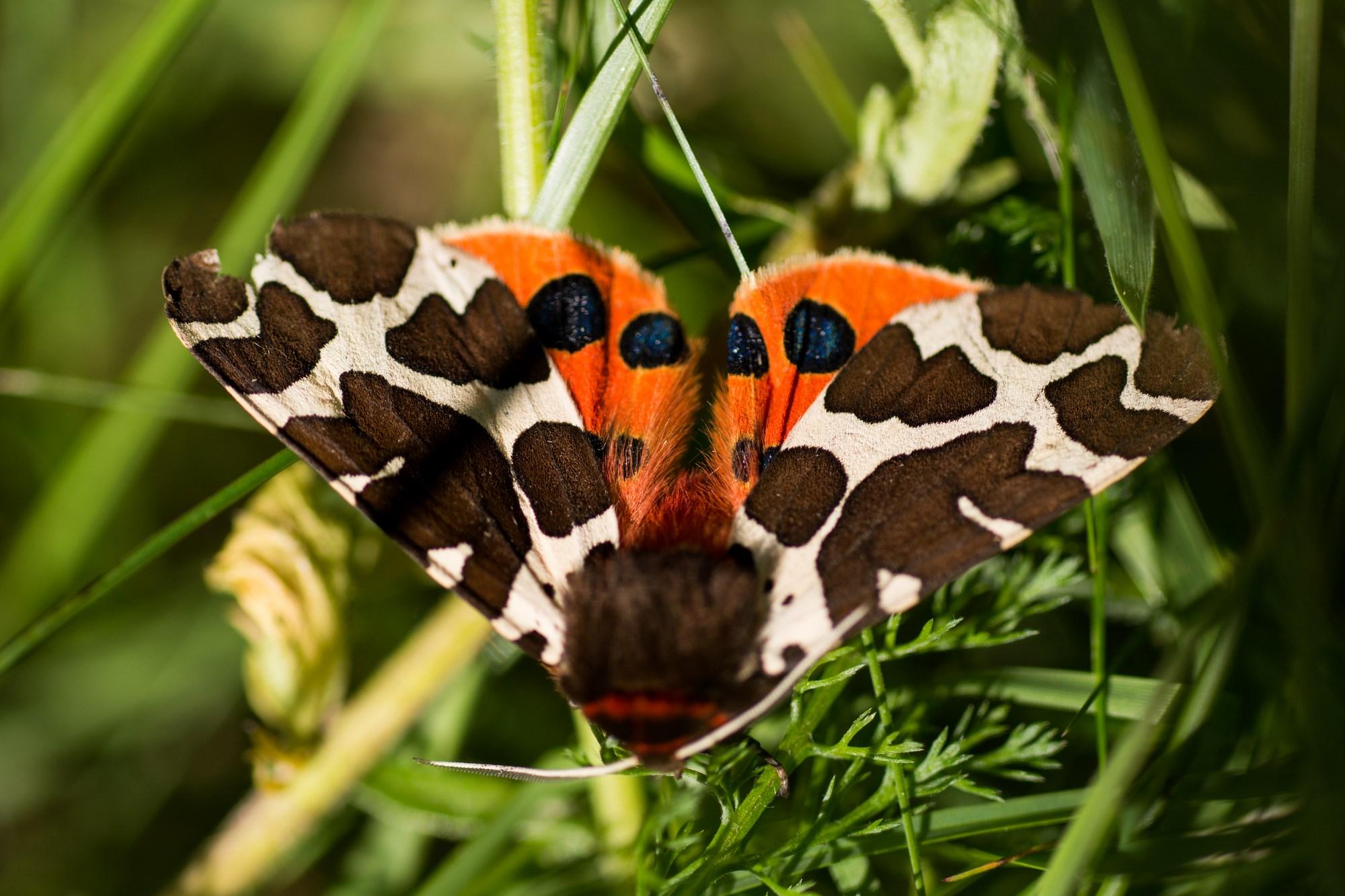 Marvellous Moths   Muir of Dinnet National Nature Reserve
