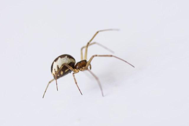 Spider on office door