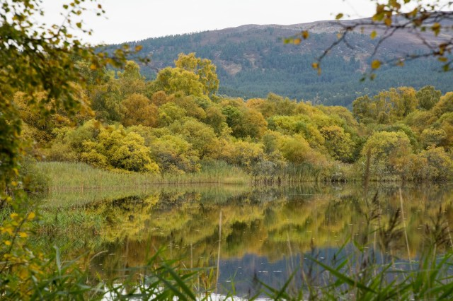 More autumn reflections