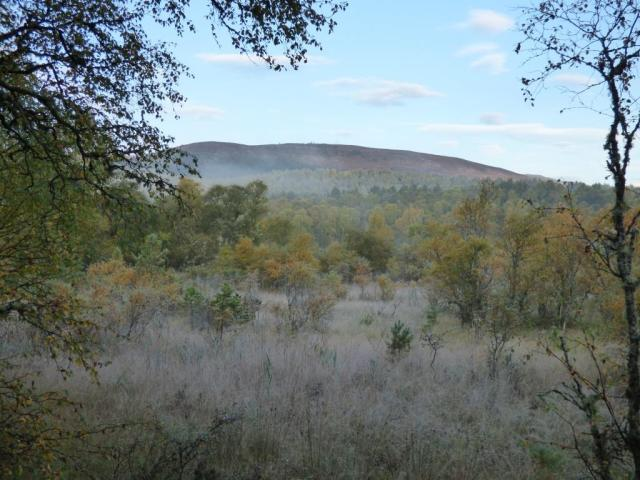 Autumn trees and frosty reedbeds