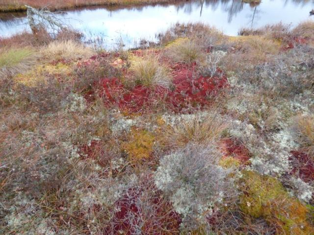 Colourful sphagnums on Parkin's Moss