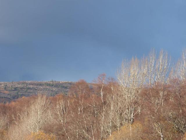 Bare trees, grey skies....a very wintery- looking scene.