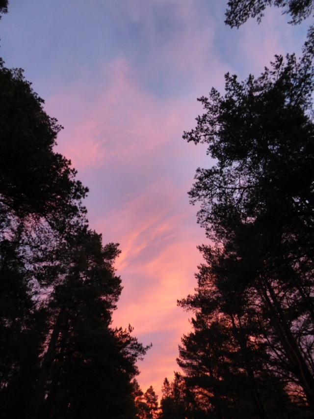 The sky through the trees this morning