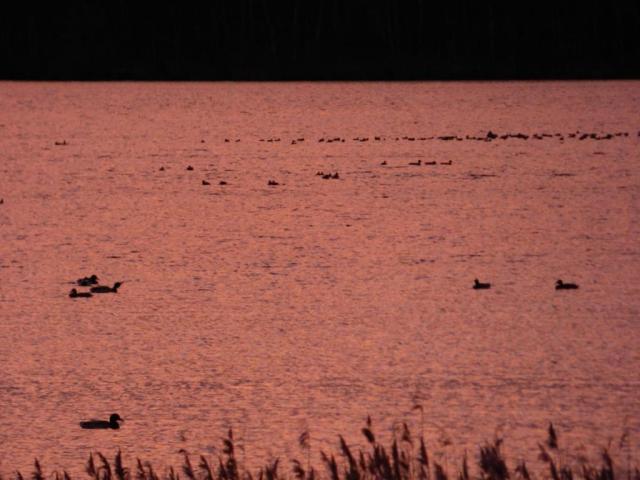 Sleepy ducks in the sunrise