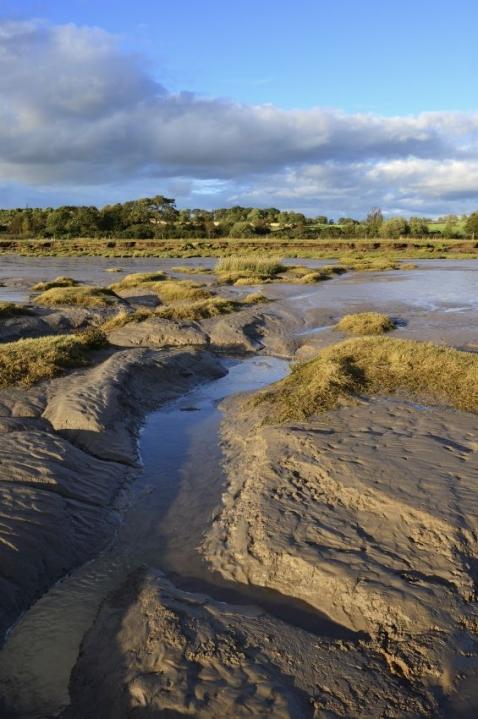 Mudflats at Caerlaverock