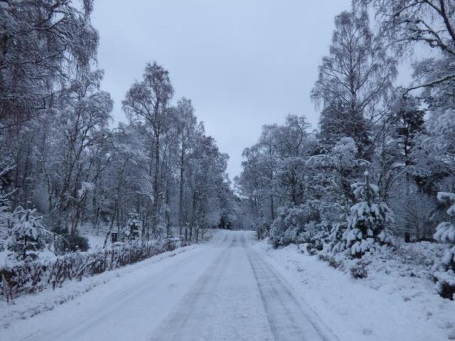 The road to the visitor centre was very slippery...but the trees were beautiful!