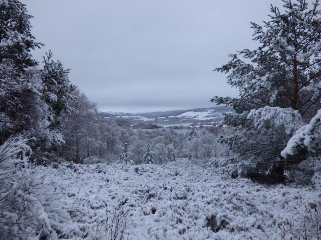 Snowy view across to Loch Kinord