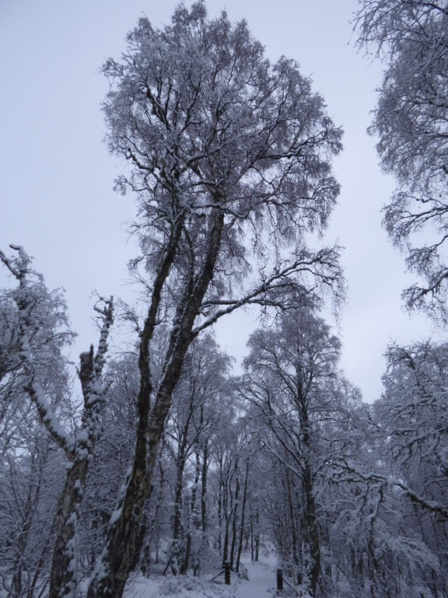 Snow has coated every branch