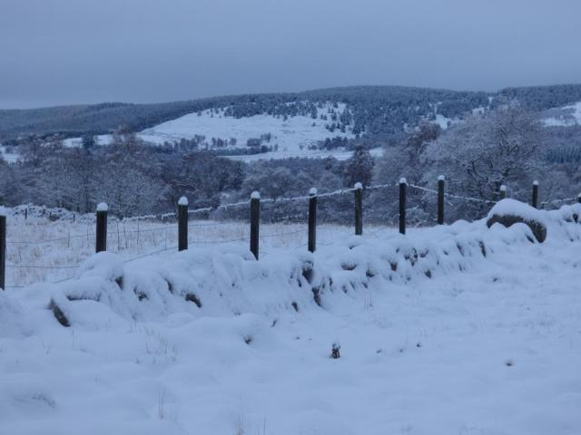 The snow has even coated the wire and fenceposts