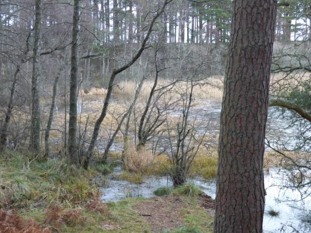 Loch Davan is high just now