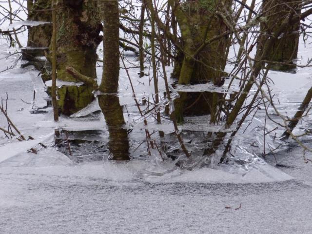 Ice tidelines