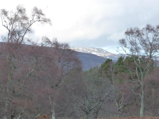 The snow has been coming and going on Morven