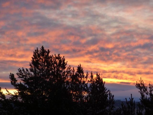 Pine trees against the sunrise