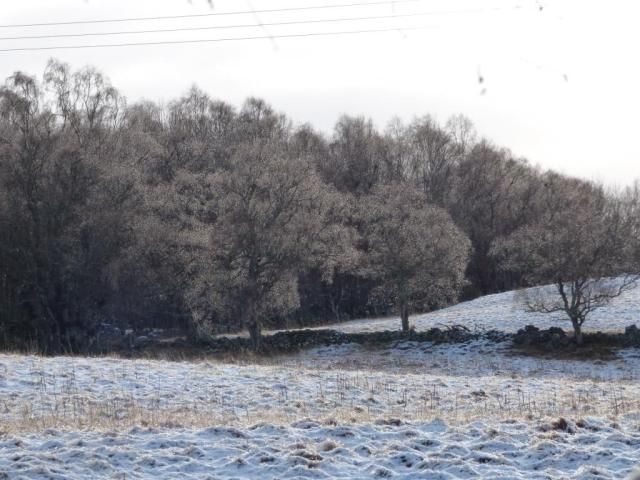 Snowy fields at Old Kinord