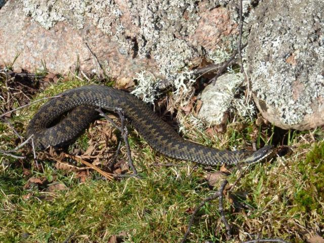 The first adder of the year