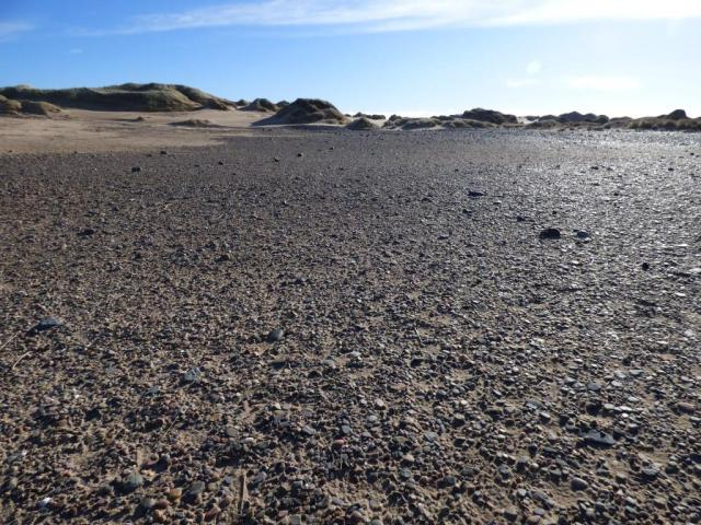 Shingle area where terns nest