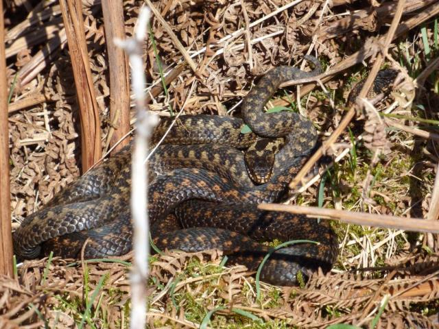 A pile of adders