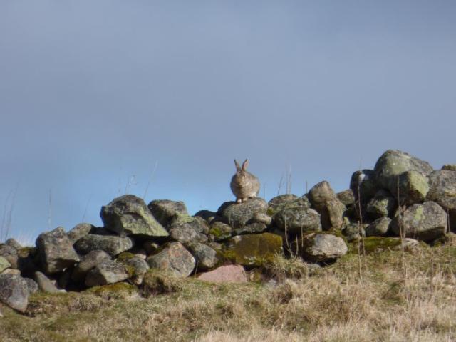 Basking rabbit