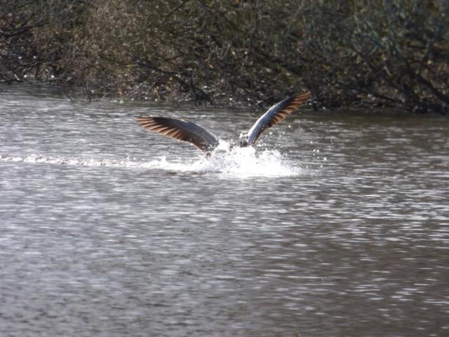 Splashdown....what is it?